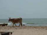 Am Strand von Bakau, nahe Banjul
